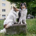 Canis Tutor - Regina Franziska Hiertz - Meine Südstadt Köln