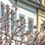 SDH Immobilien Köln