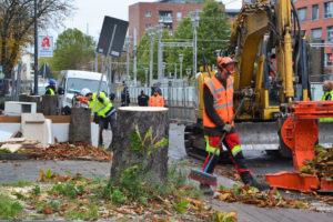 Baumsterben auf der Bonner Straße - Meine Südstadt Köln