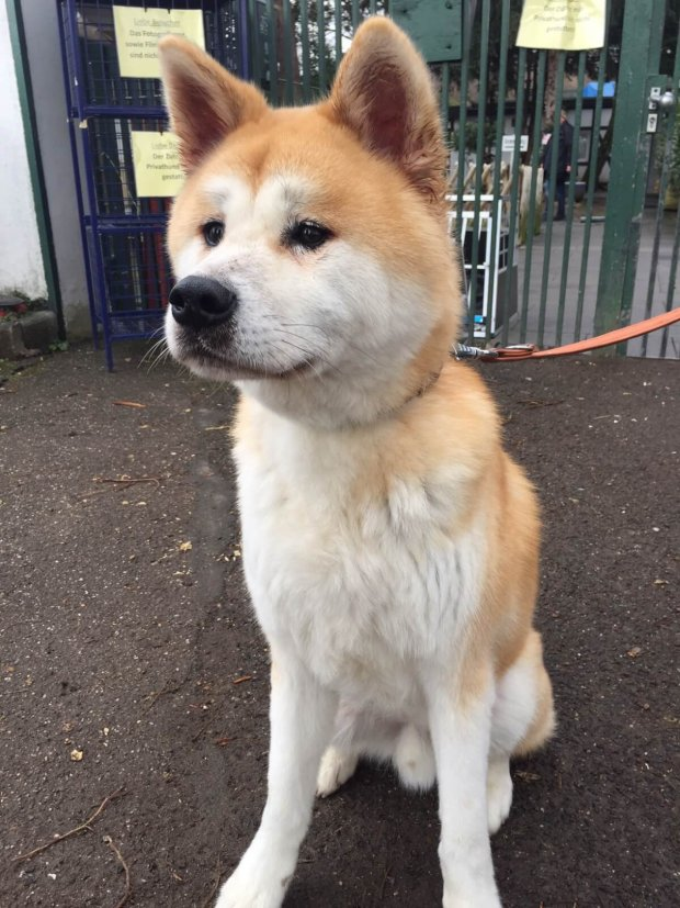 Hund im Tierheim Zollstock